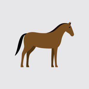 Paard & kalkoen